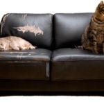 Красивая икачественная перетяжка мягкой мебели— 20 фото