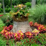 Необычные клумбы из пней или как украсить пень в саду. 60 фото