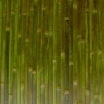 Бамбуковые обои — новинка в интерьере