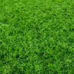 Уход за участком: полив газона — это важно!