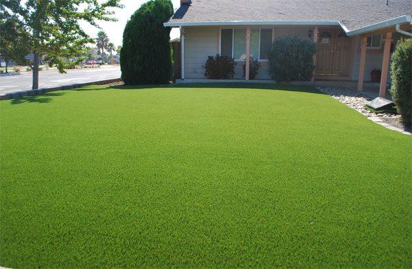 Плюсы и минусы газонной травы на дачном участке