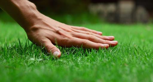 Какие критерии важны при выборе газонной травы
